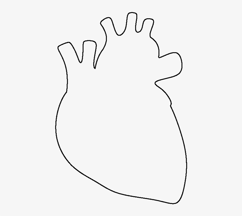 Human Heart Drawing Png Svg Free Library Anatomical Heart Drawing Simple Transparent Png 550x712 Free Download On Nicepng