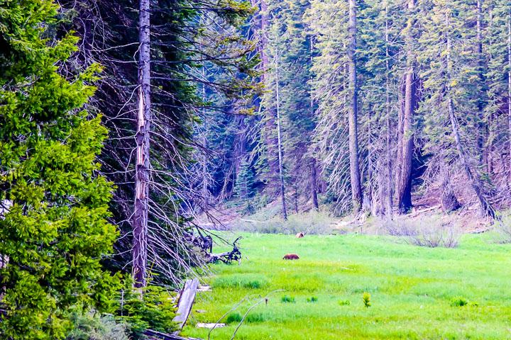 P032 California Road Trip Wildlife