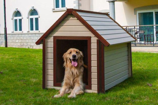 Niche pour chien: quels matériaux privilégier?
