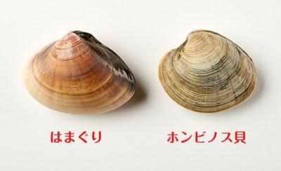 「ホンビノス貝」の画像検索結果