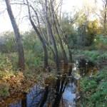 Sumpf in der Lobau