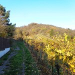 Weinberge am Goldtal