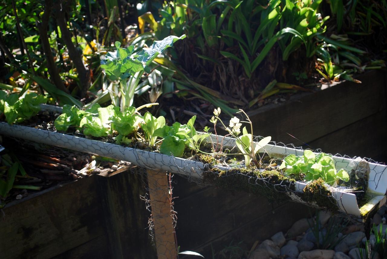 backyard aquaponics nick rose