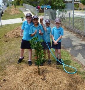 Sawtell Public School kids planting citrus trees
