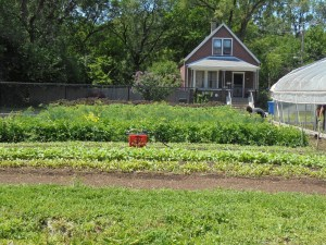 Productive urban lots, Growing Home, Englewood, Southside Chicago