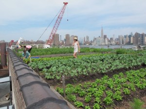 Rooftop Farming in New York City