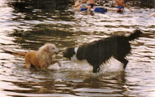 Freebie & Friday playing n Wallingford River