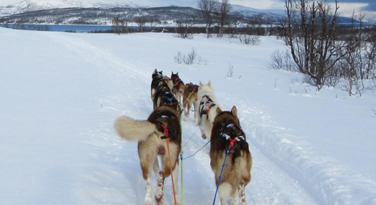 Husky sledding in Tromso Norway