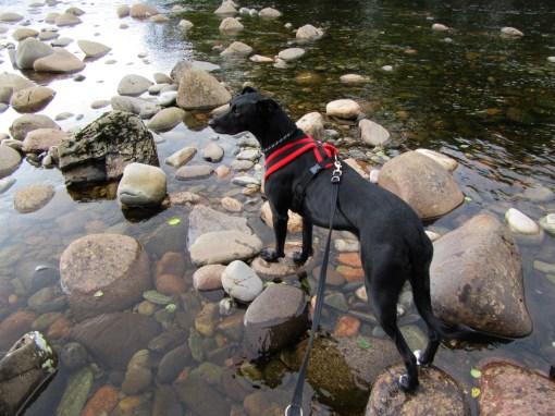 McDog looking for fish