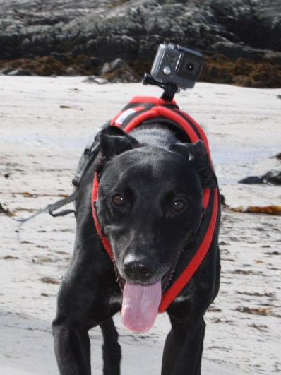 McDog with his DogCam