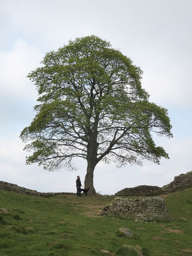 Sycamore Gap at Hadrian's Wall