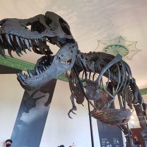 Titus Tyrannosaurus rex Exhibition at Wollaton Hall