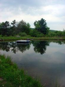 fokish farm other farm pond