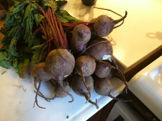 """These organic CSA beets average about 1""""-2"""" in diameter; this many beets will produce a good 3 pint jars worth of canned beets."""