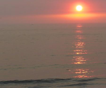 sundownfin