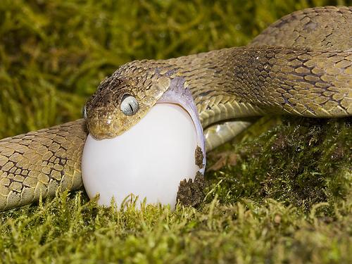 snake egg.jpg