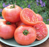 Tomato Pink Pounder 10 seeds