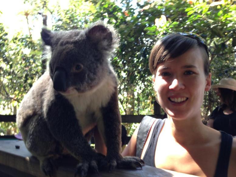 A koala at Koala Park, West Pennant Hills, Sydney