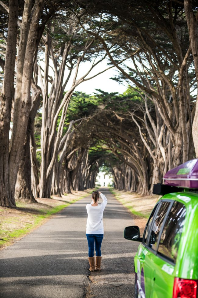Cypress Tree Tunnel, Point Reyes