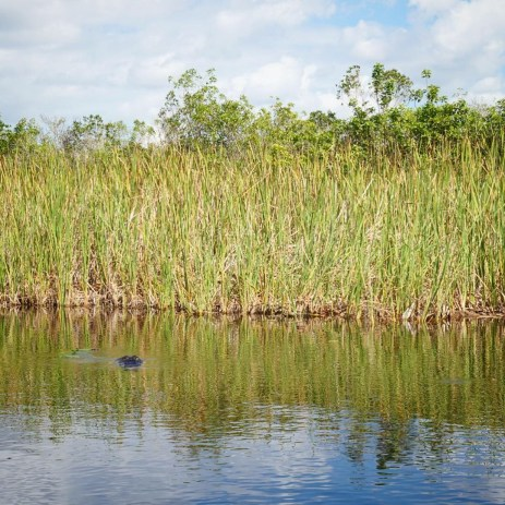 Alligator spotting at Everglades Holiday Park, Fort Lauderdale.