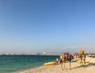 Camels on the beach, Dubai