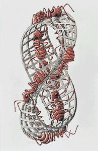 M. C. Escher, Möbius Strip II, 1963 (fonte: mcescher.com)