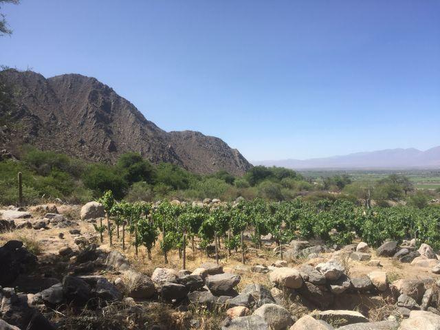 Finca Altos Los Cuises de El Porvenir de los Andes