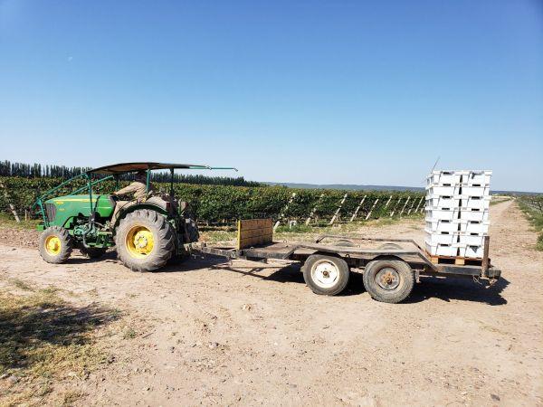 Tractor en vendimia (Chakana Wines)