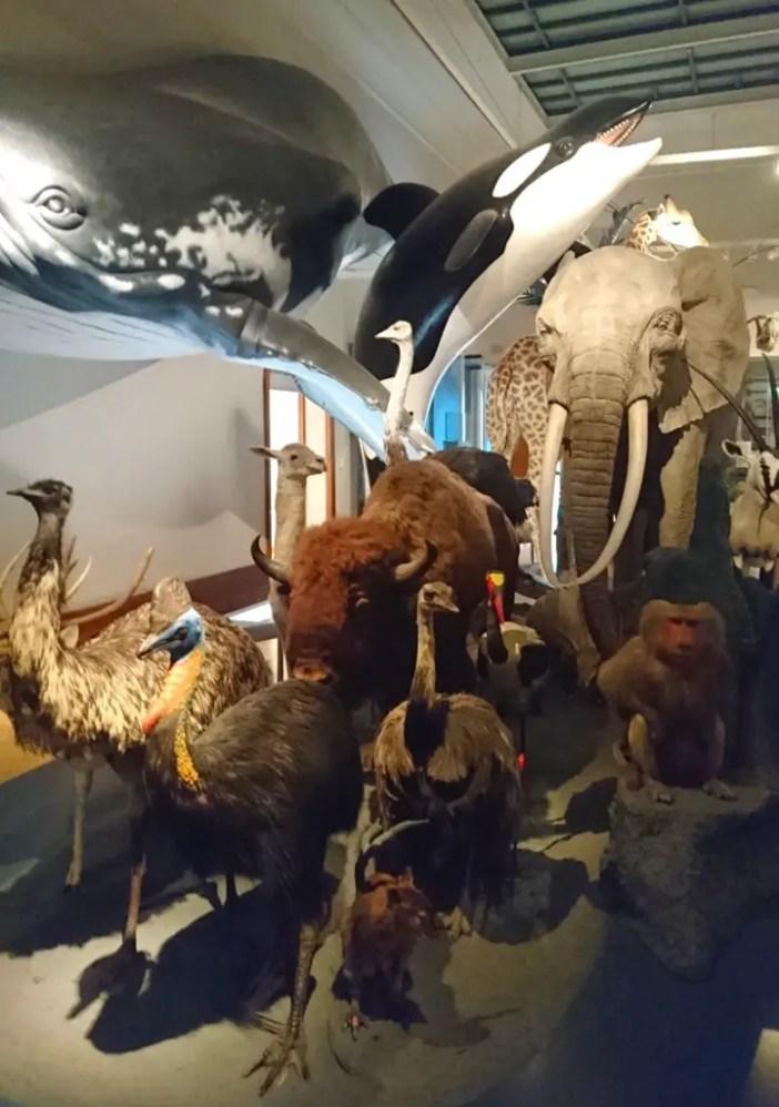 """sehenswuerdigkeiten-magdeburg-reisetipps-sachsen-anhalt-reisetipps-deutschland-museum-fuer-naturkunde-tiere"""" srcset=""""https://i2.wp.com/www.nicolos-reiseblog.de/wp-content/uploads/2018/01/sehenswuerdigkeiten-magdeburg-reisetipps-sachsen-anhalt-reisetipps-deutschland-museum-fuer-naturkunde-tiere-720x1024.jpg?resize=702%2C998&ssl=1 720w, https://www.nicolos-reiseblog.de/wp-content/uploads/2018/01/sehenswuerdigkeiten-magdeburg-reisetipps-sachsen-anhalt-reisetipps-deutschland-museum-fuer-naturkunde-tiere-211x300.jpg 211w, https://www.nicolos-reiseblog.de/wp-content/uploads/2018/01/sehenswuerdigkeiten-magdeburg-reisetipps-sachsen-anhalt-reisetipps-deutschland-museum-fuer-naturkunde-tiere.jpg 800w"""" sizes=""""(max-width: 702px) 100vw, 702px"""" data-wp-pid=""""6895"""" nopin=""""nopin""""/></dt data-recalc-dims="""