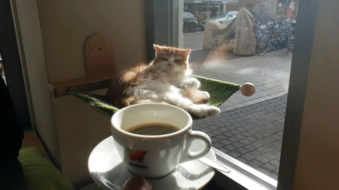 """best-cafes-munich-café-kat-tempel-koffie-kat """"width ="""" 1200 """"height ="""" 675 """"data-wp-pid ="""" 9463 """"srcset ="""" https://www.nicolos-reiseblog.de/wp- inhoud / uploads / 2018/12 / best-cafes-munich-café-cat-temple-coffee-cat.jpg 1200w, https://www.nicolos-reiseblog.de/wp-content/uploads/2018/12/besten-cafes -muenchen-café-kat-tempel-koffie-kat-300x169.jpg 300w, https://www.nicolos-reiseblog.de/wp-content/uploads/2018/12/besten-cafes-muenchen-cafe-katzentempel-coffee- catze-1024x576.jpg 1024w, https://www.nicolos-reiseblog.de/wp-content/uploads/2018/12/besten-cafes-muenchen-cafe-katzentempel-kaffee-katze-800x450.jpg 800w, https: //www.nicolos-reiseblog.de/wp-content/uploads/2018/12/besten-cafes-muenchen-cafe-katzentempel-kaffee-katze-300x169@2x.jpg 600w """"sizes ="""" (max-width: 1200px ) 100vw, 1200px """"/></p data-recalc-dims="""