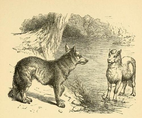 Fedro, Il lupo e l'agnello