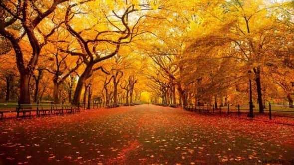 Perché amo l'autunno…