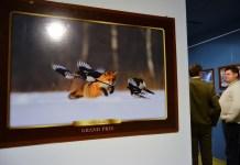 Zdjęcia w rytmie przyrody Niebywałe Suwałki 6
