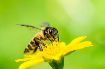 Ekologia a neonikotinoidy. Graham White o ginących pszczołach Niebywałe Suwałki 4