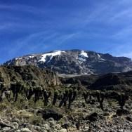 Kilimanjaro2_0010