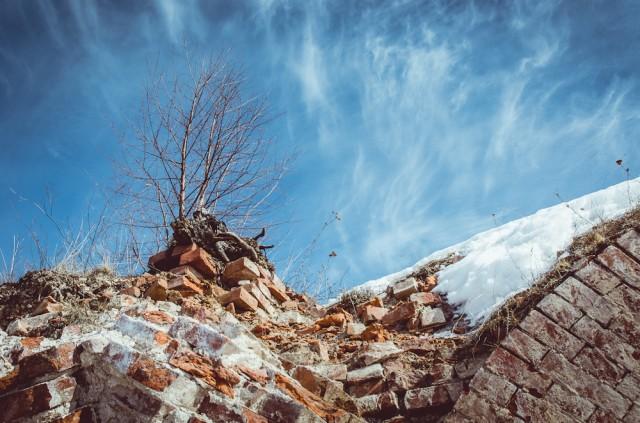 Ant griuvėsių užaugo kelios medelių kartos