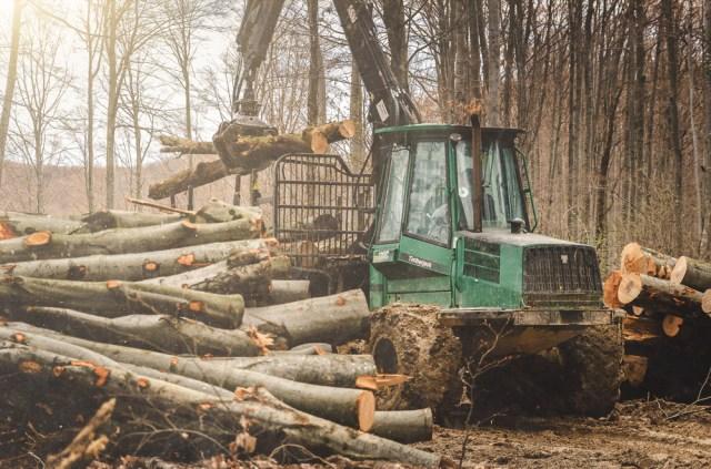 Norėdami prieiti prie teritorijos pirmiausia turėjome prasibrauti pro mišką tvarkančią techniką
