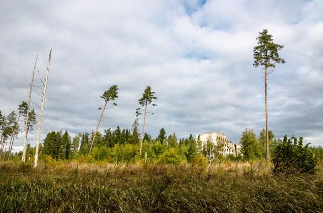 Vaizdas nuo kelio, einančio lygiagrečiai Lietuvos-Latvijos sienos