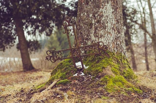 """Iš medžio """"išaugęs"""" kryžius"""