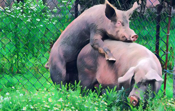 Strajk nauczycieli, czyli partyjne żarcie świń