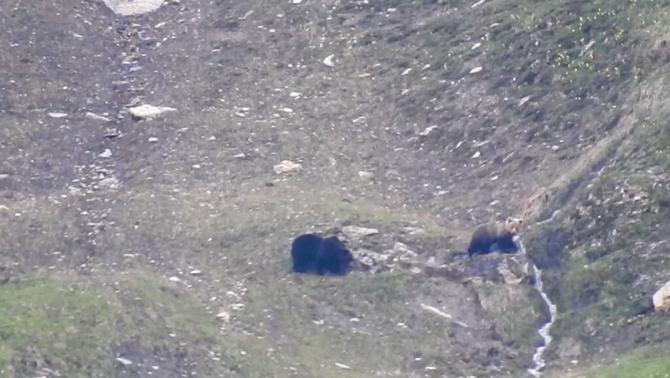 La pareja de plantígrados en la Val d'Aran