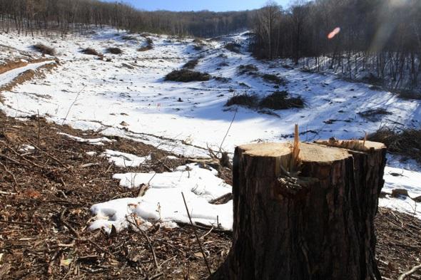 Los trabajos de construcción se llevaron por delante bosques con árboles de más de quinientos años. FOTO: Ha llegado el deshielo en las pistas recién construidas de Pyeongchang y los expertos ya predicen deslizamientos de tierras FOTO: http://english.hani.co.kr/