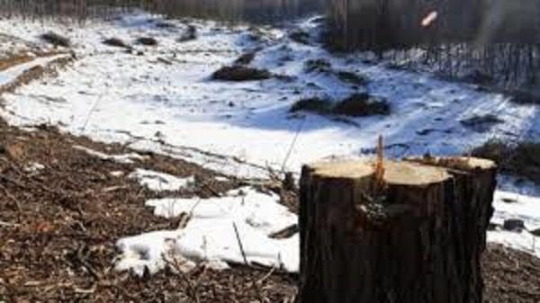 Se talaron bosques para construir pistas de esquí cuya viabilidad futura está más que cuestionada. FOTO: http://english.hani.co.kr