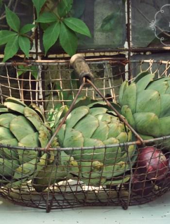 artichokes01