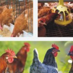 Poultry Production Business Plan In Nigeria