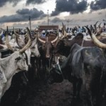 LiveStock Business Plan In Nigeria