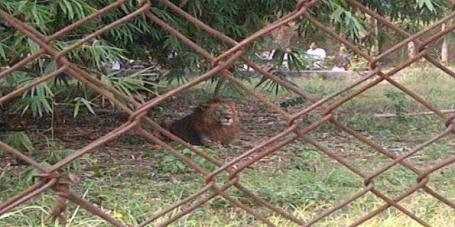 Nekede-Zoo-Imo