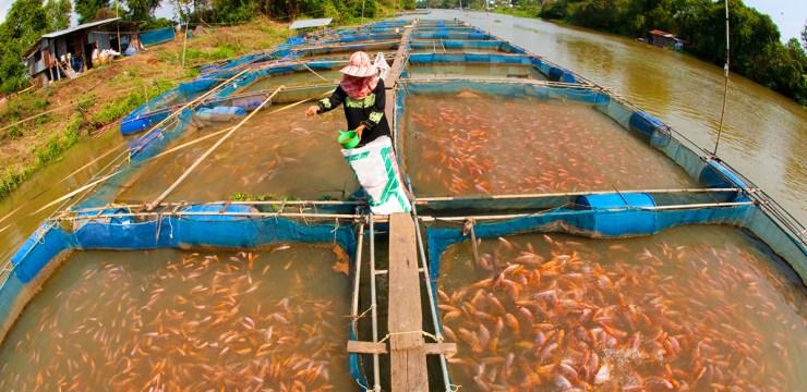 Fish Farming in Nigeria - Fish pond inside a river