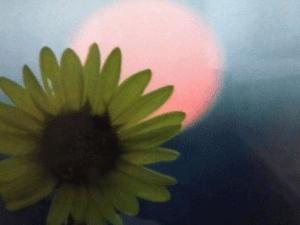 Moon-Flower 10 x 12