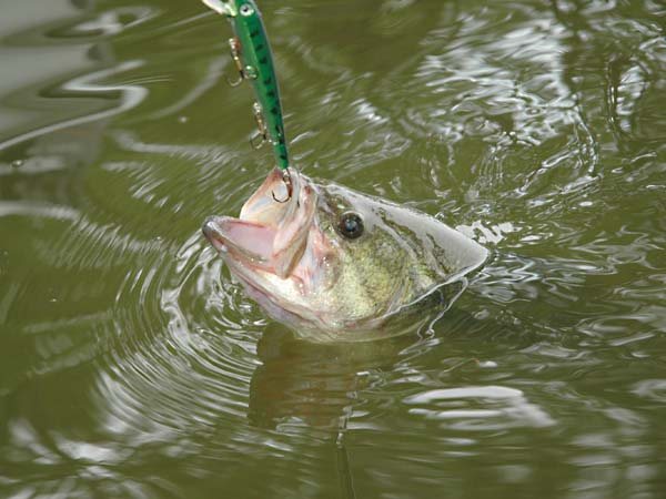 Farm Pond Fish Stocking Rates